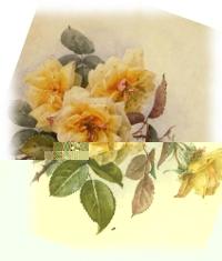 Картинки для декупажа. Желтые розы